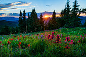 Sawatch Mountains Summer View with Wildflowers - Landscape scenic with incredible sunset views.