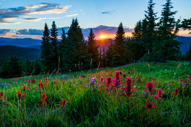 Sawatch Mountains Summer View with Wildflowers Sawatch Mountains Summer View with Wildflowers - Landscape scenic with incredible sunset views. rocky mountains north america stock pictures, royalty-free photos & images