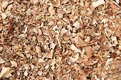 hosta, tardiana, haylcyon, green, large, leaves, leaf, bunch, may, plant, shade, tolerant, bark