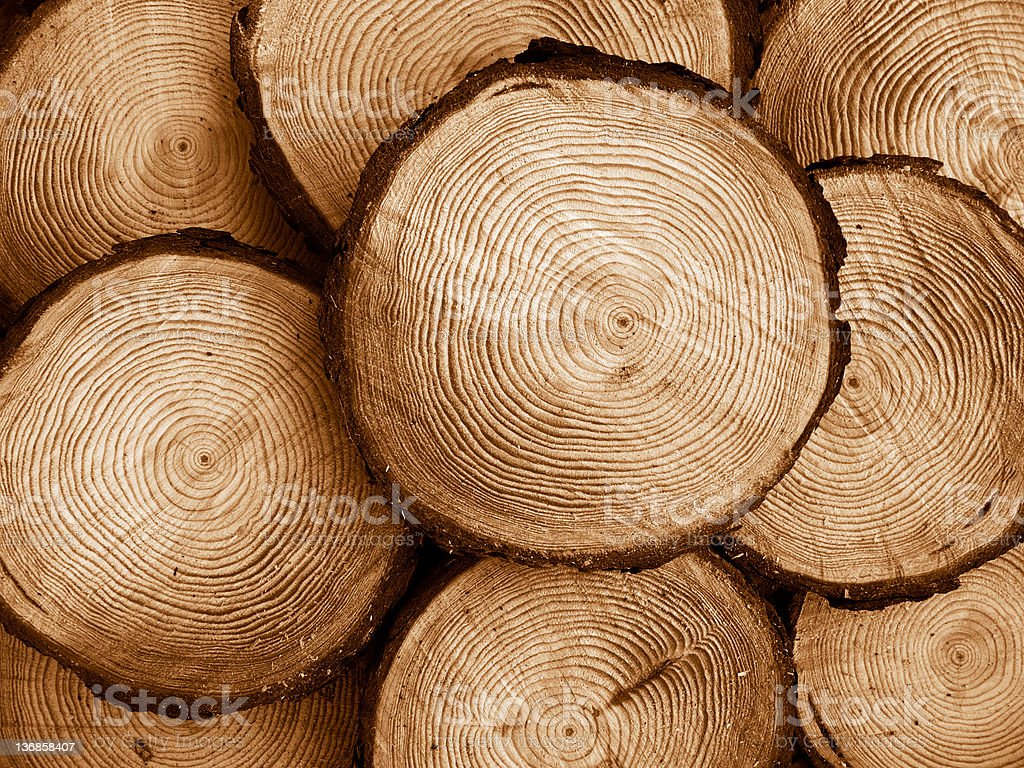 sawed pine wood stock photo