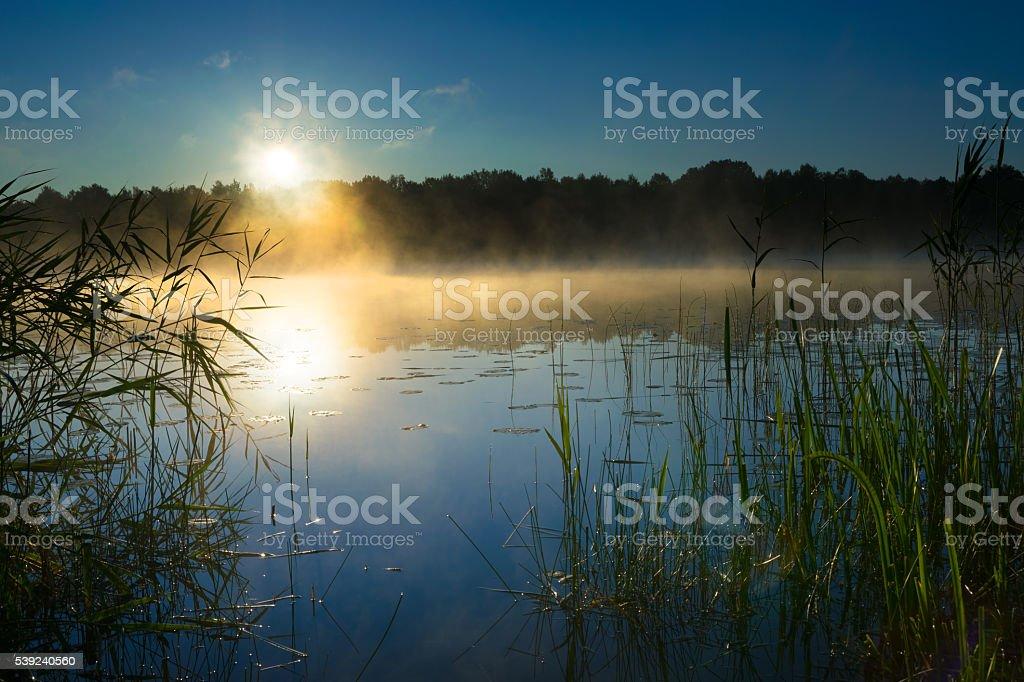 Sawinda sunrise 1 royalty-free stock photo