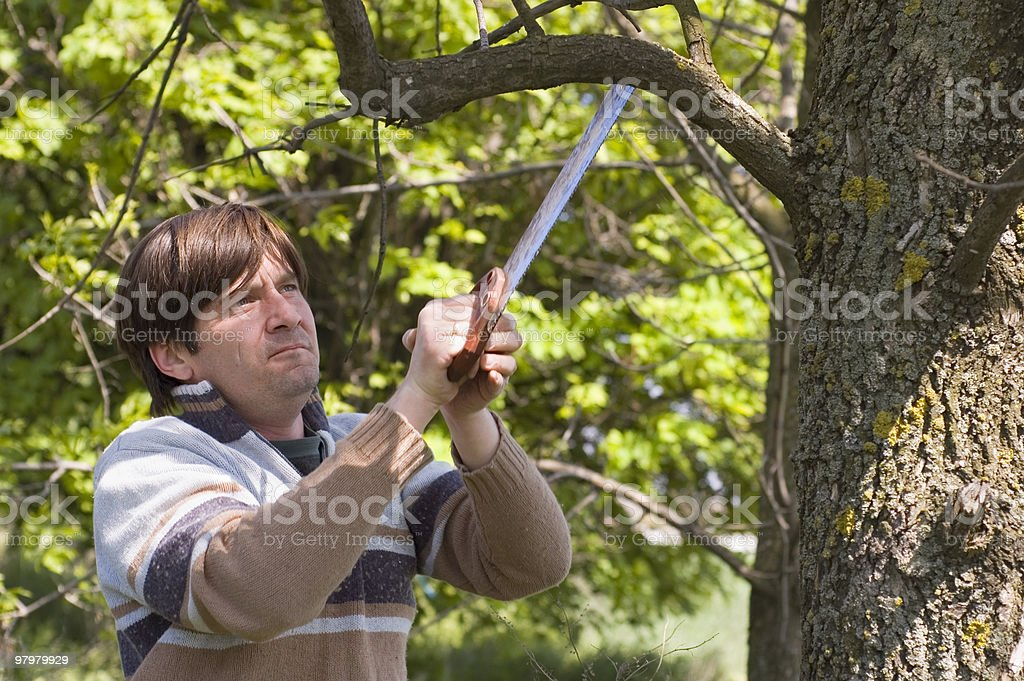sawing royalty-free stock photo