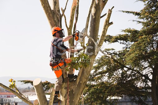 Standing on tree with safety equipment and sawing tied branch on rope with chainsaw.