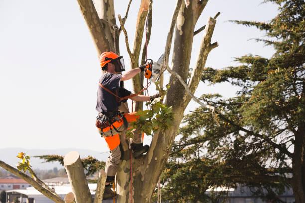 piłowanie wierzchołka drzewa - ciąć zdjęcia i obrazy z banku zdjęć