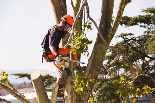 Sawing very tall tree picture id1131581722?b=1&k=6&m=1131581722&s=612x612&w=0&h=enerd18khdj9cu  qctstk mmqhibuijkmxsznqfbu0=