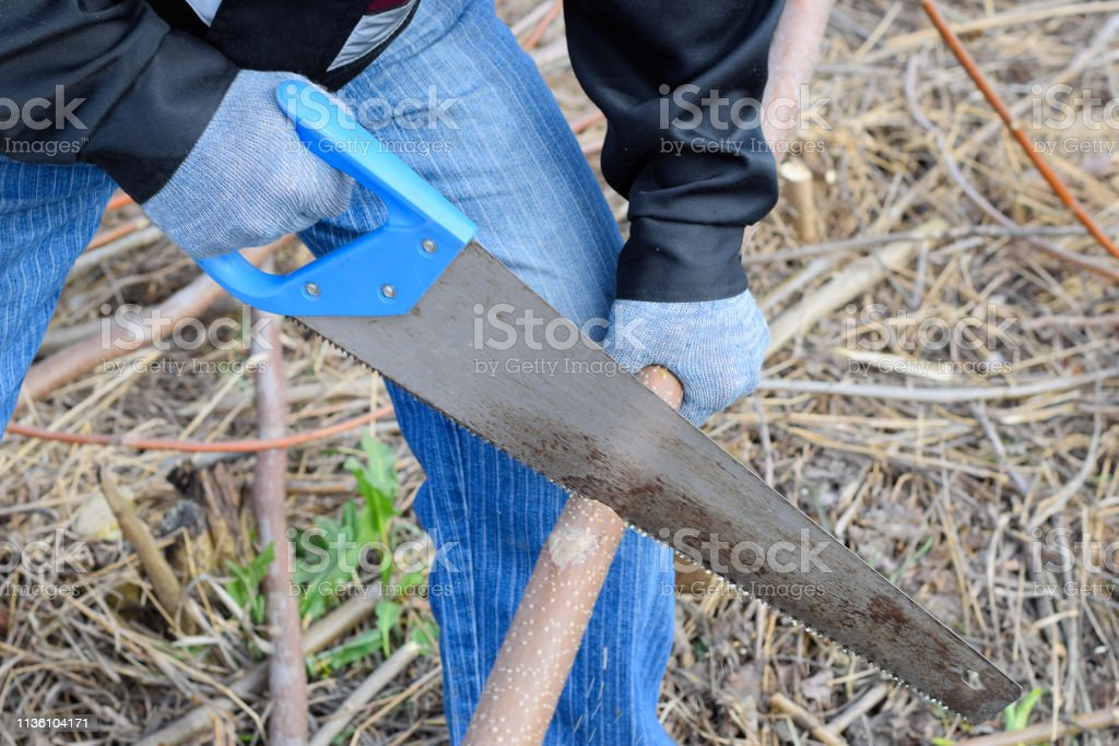 Sawing with a hand saw of a wood branch. man saws sawing a tree...
