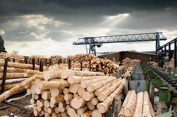 sawmill - saw stockfoto's en -beelden