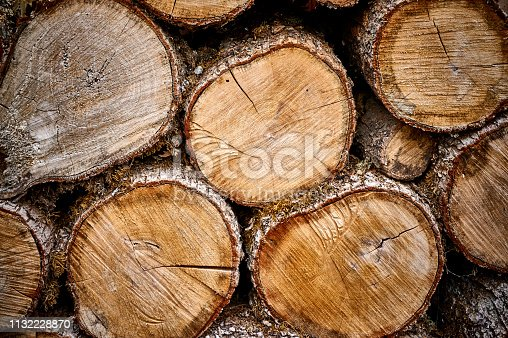 Sawn oak logs laid. Original natural texture on the stump end. Close-up. Yellow, gray, brown annual rings at the end of the stump as a background. Nature concept for design
