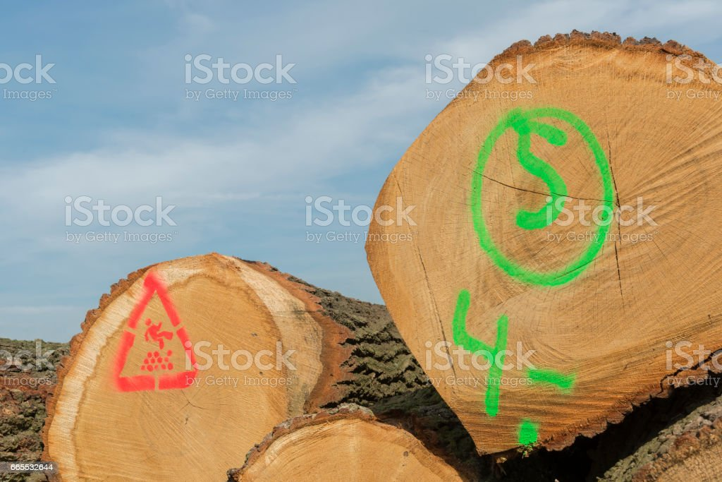Sawn trunks stacked on the side of the road stock photo