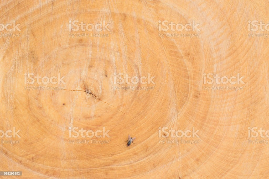 sawn wood texture as background stock photo