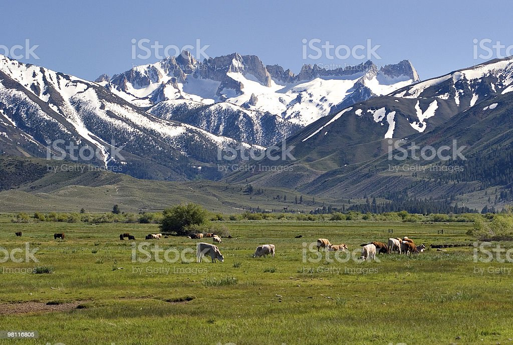Sawtooth Ridge from Bridgeport royalty-free stock photo
