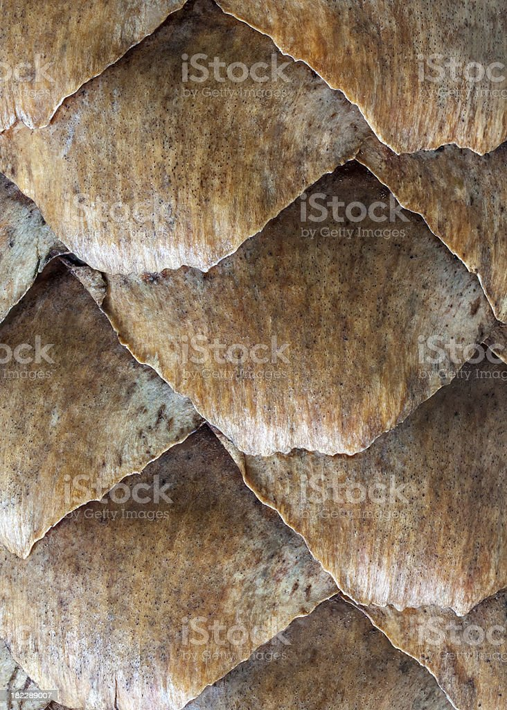 scales of spruce cones stock photo