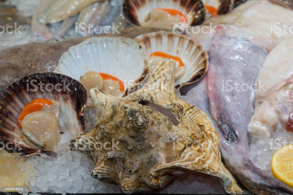 Scallop in Borough Market, London stock photo