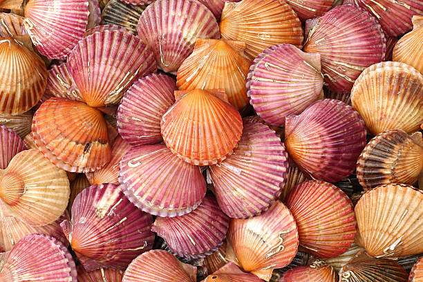 Afbeeldingsresultaat voor orange pink shells