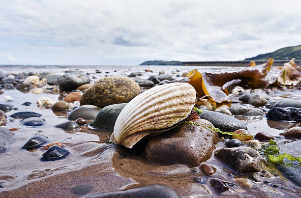 Scallop Shoreline stock photo