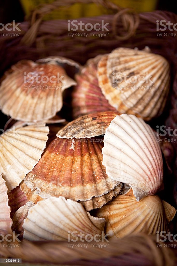 coquilles St. Jacques royalty-free stock photo