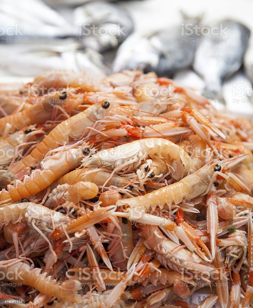 Scampi. First class fishermans catch on market stall royalty-free stock photo