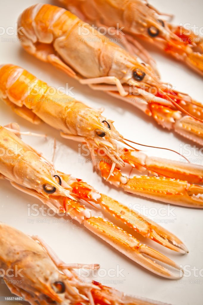 Scampi royalty-free stock photo