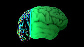istock MRI scan of the brain in the color green 1192186130