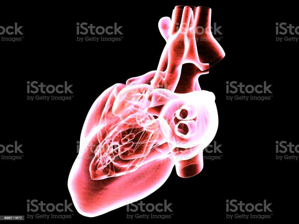 MRI Scan of The Human Heart stock photo