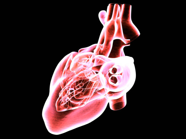 mri scan of the human heart - medical scan stock photos and pictures