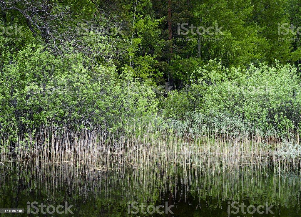 Scandinavia lake view royalty-free stock photo