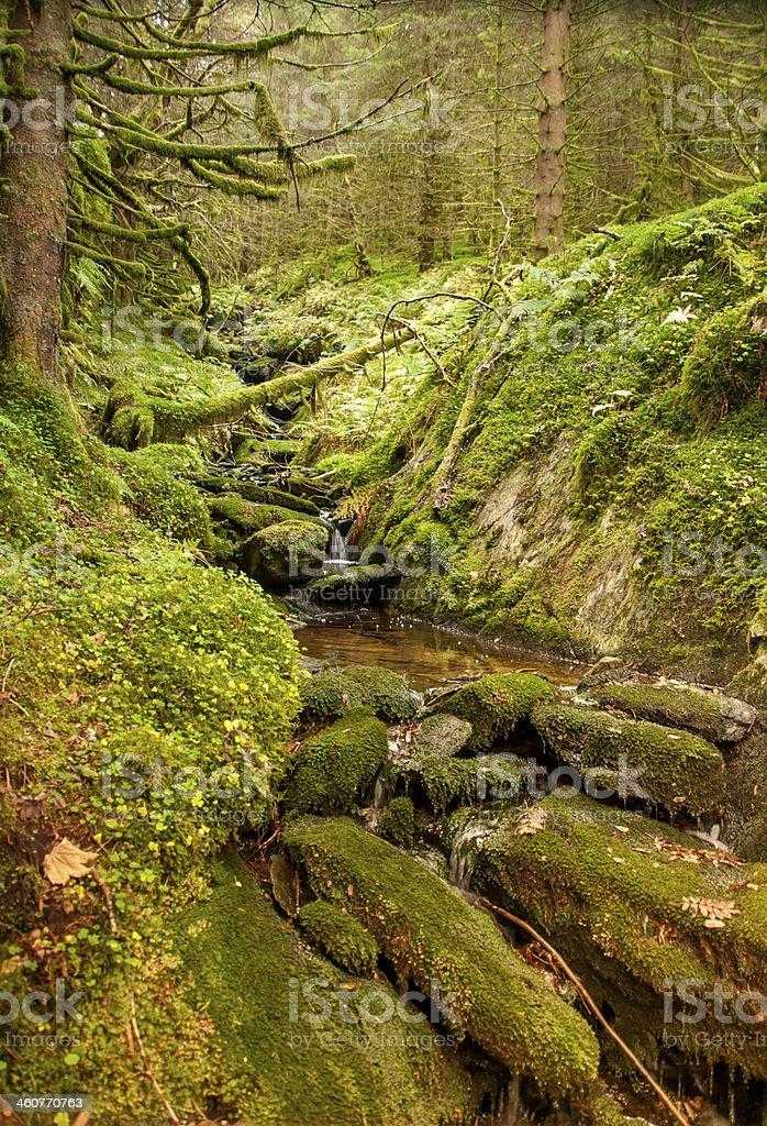 Scandinavian nature stock photo