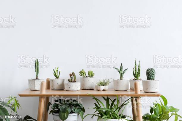 Scandinavian room interior with plants cacti and succulents in and picture id1125385814?b=1&k=6&m=1125385814&s=612x612&h=fbswq44z2kzgtayoompf 4kv1frmzxtgc4ngsfosebc=