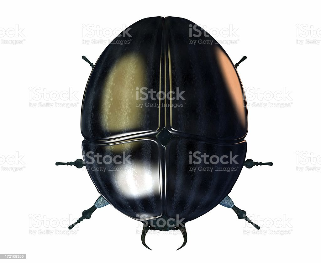 Scarab beetle royalty-free stock photo