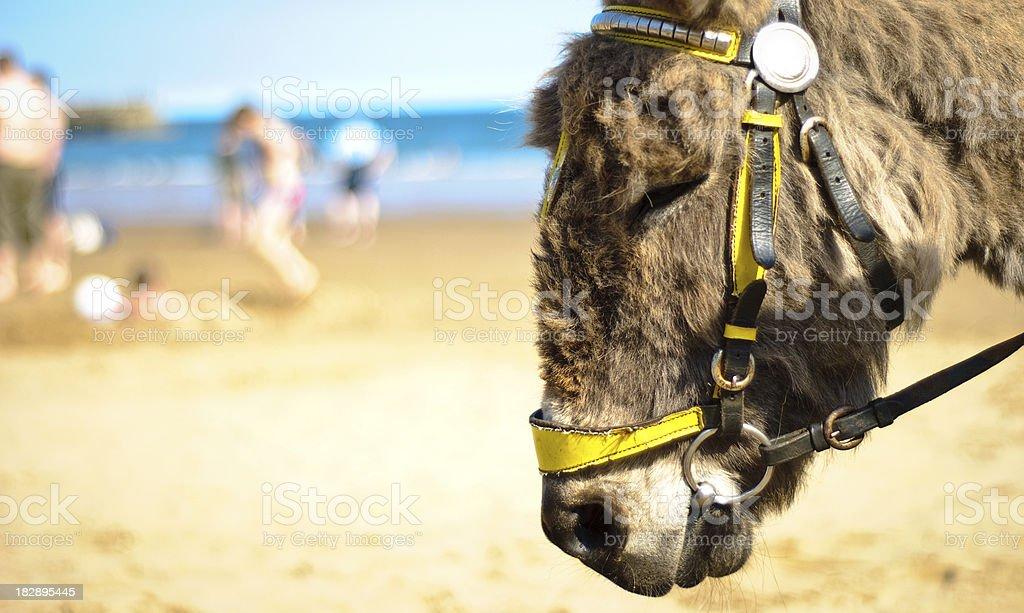 Scarborough Donkey stock photo