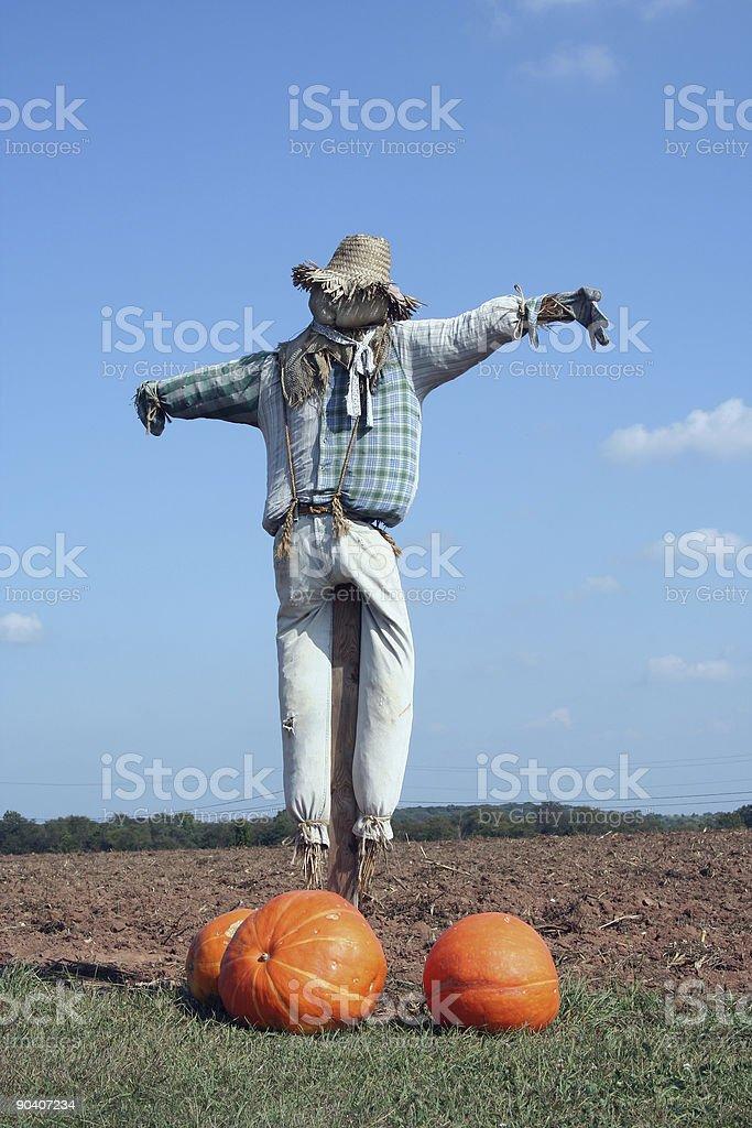 Scarecrow and pumpkins stock photo