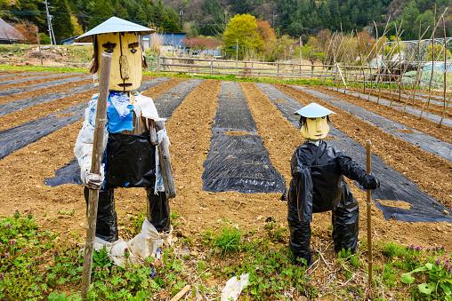 Scarecrow at Japanese farm, Yamanashi, Japan