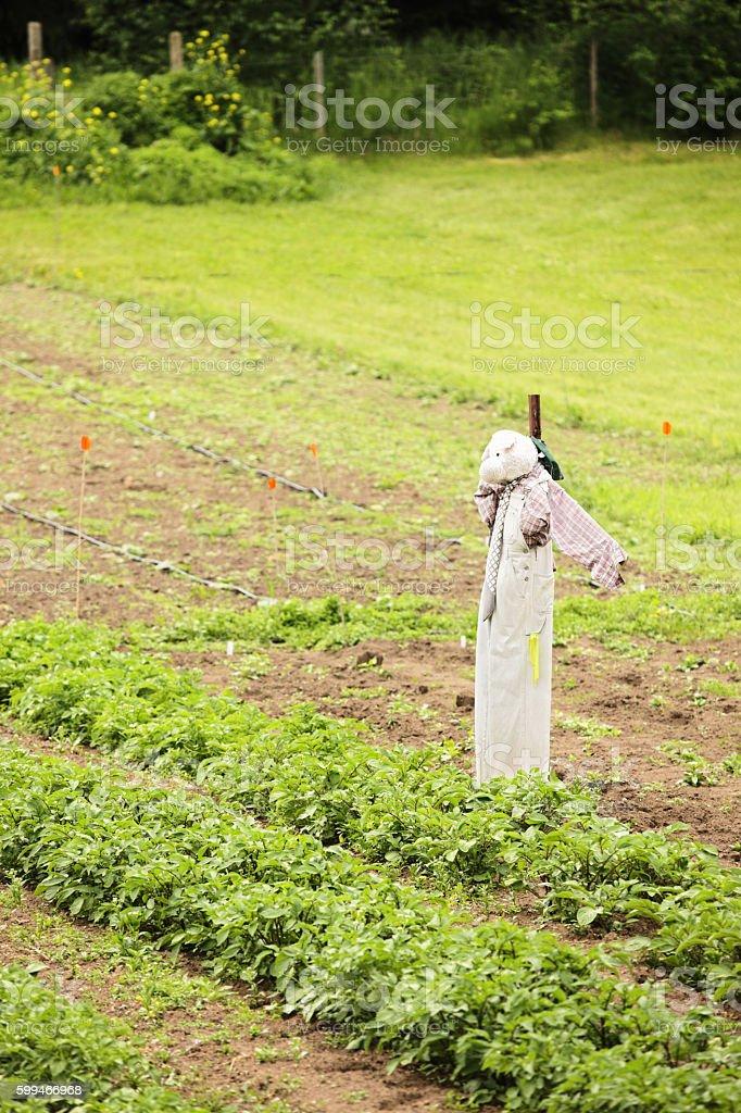 Scarecrow Bird Scarer Garden Crop Defense stock photo