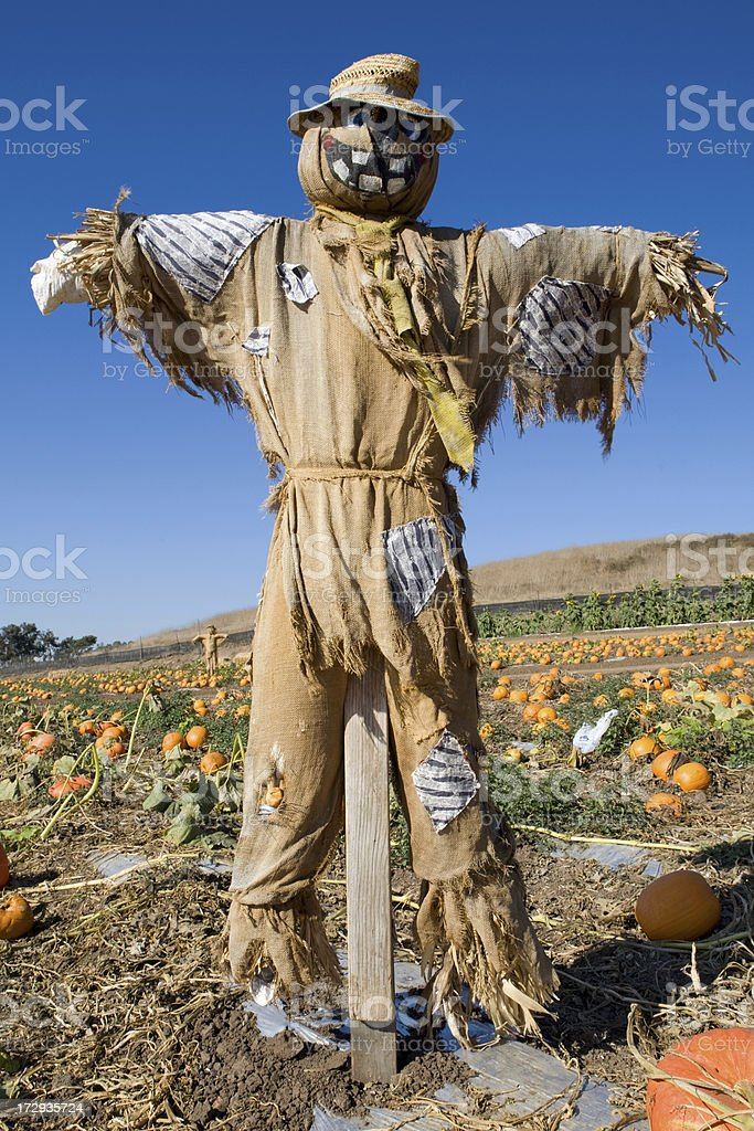 Scarecrow in a Pumpkin Patch stock photo