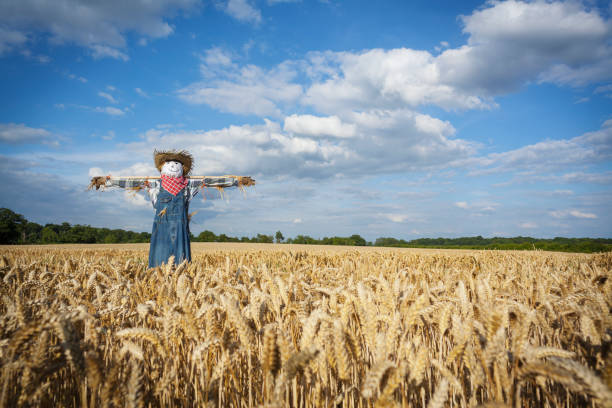Scarecrow Stock Photos, Pictures & Royalty-Free Images ...
