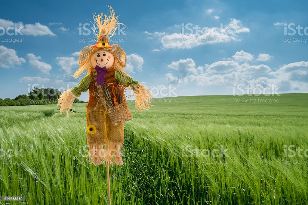 Scarecrow in Barley Field stock photo