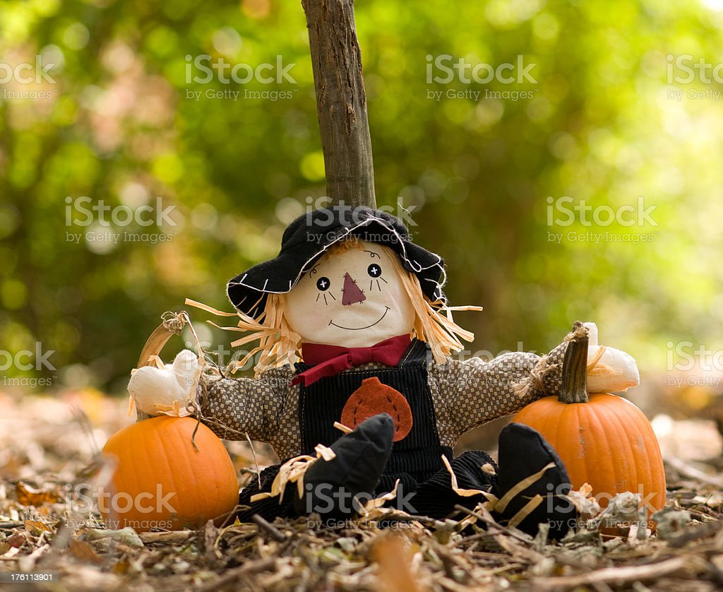 scarecrow in the Autumn woods with pumpkins royalty-free stock photo