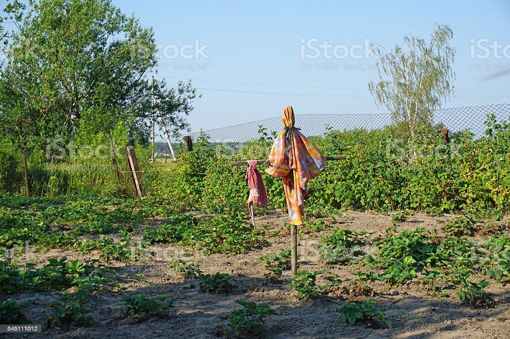 Scarecrow in the garden stock photo