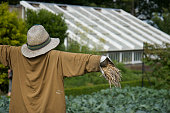 Scarecrow with straw hat In vegetable Patch shot from the side with shallow depth of field