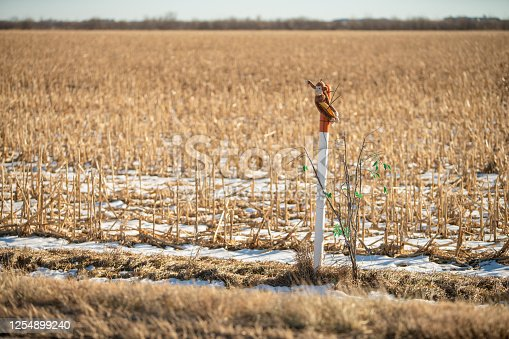 Harvested cornfields in Nebraska, USA, in the winter sunny day.