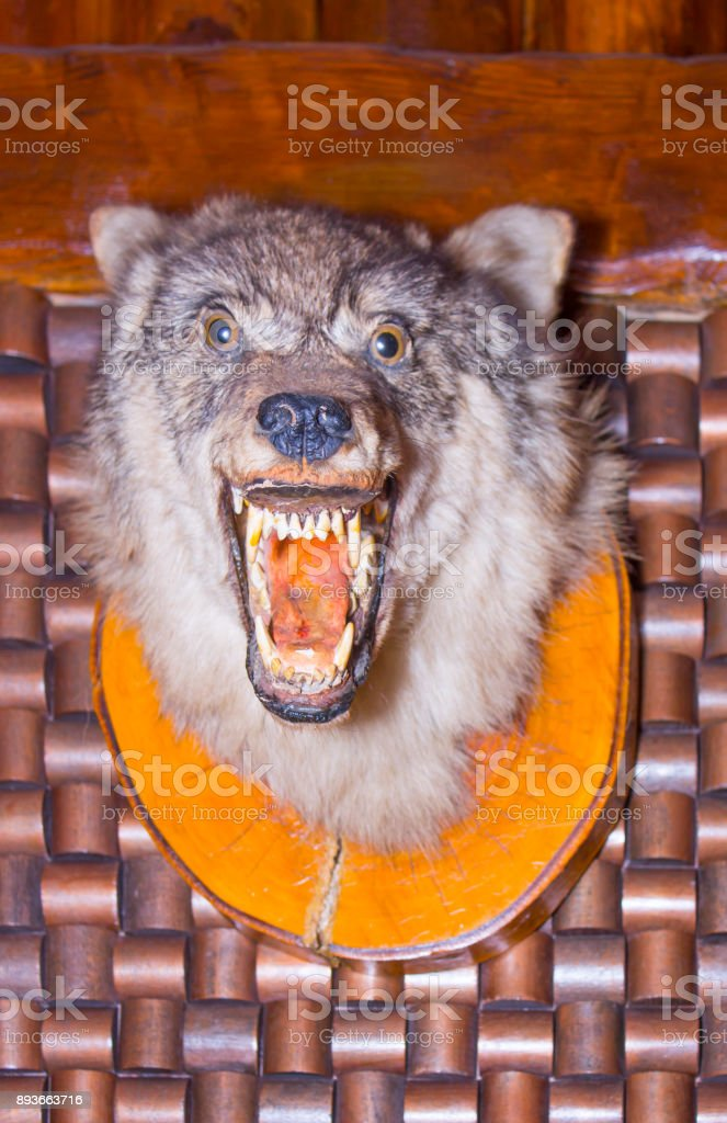 Scarecrow of a wolf on a wooden wall stock photo