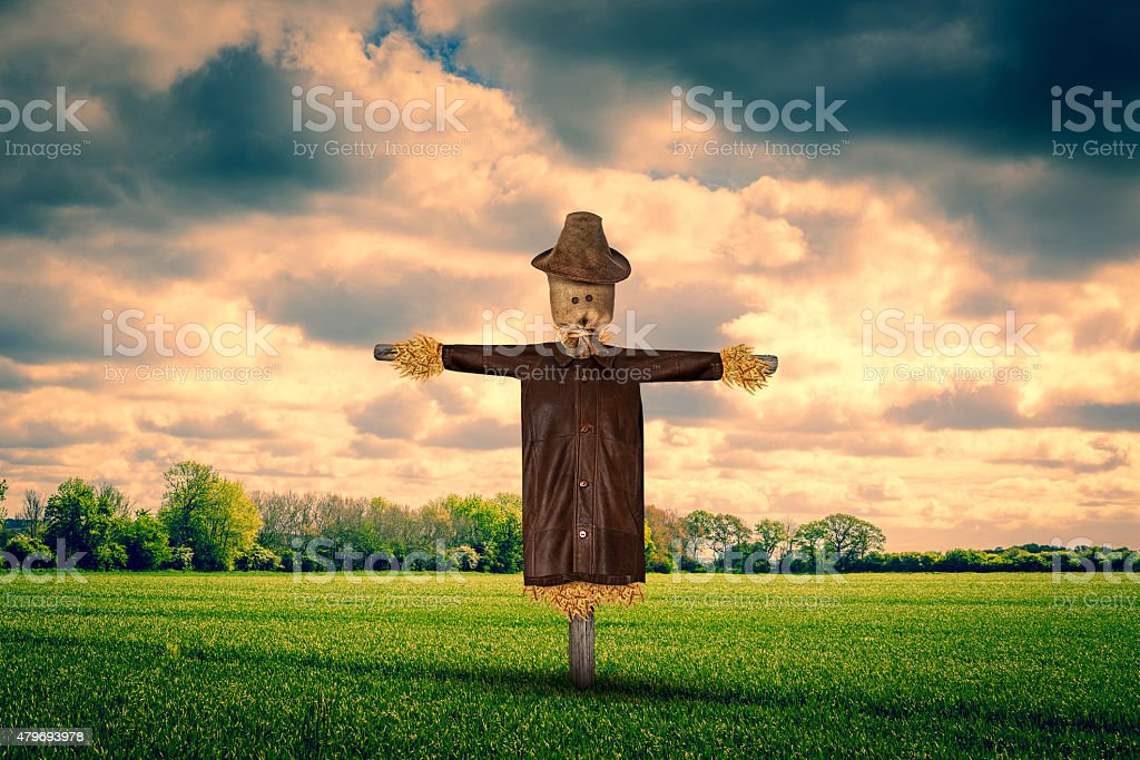 Scarecrow on a green field stock photo