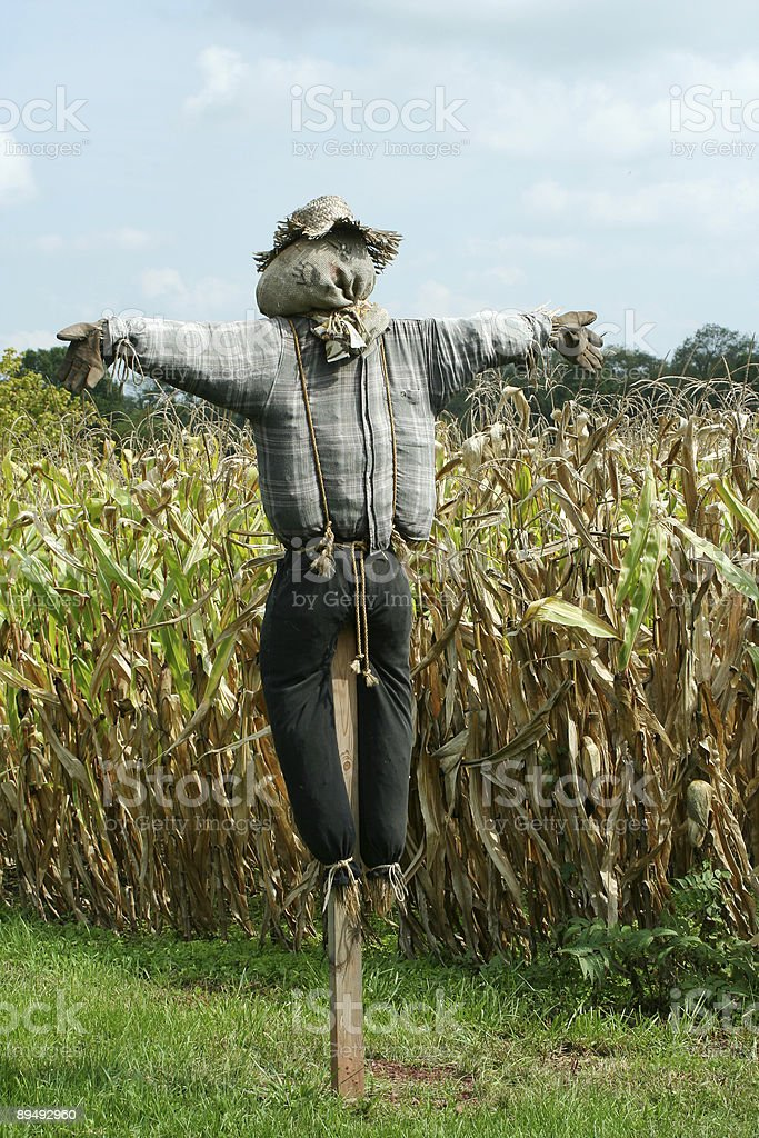 Scarecrow protecting a corn field stock photo