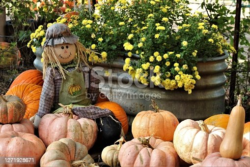 A scarecrow is sitting on a pile of pumpkins at a pumpkin patch.