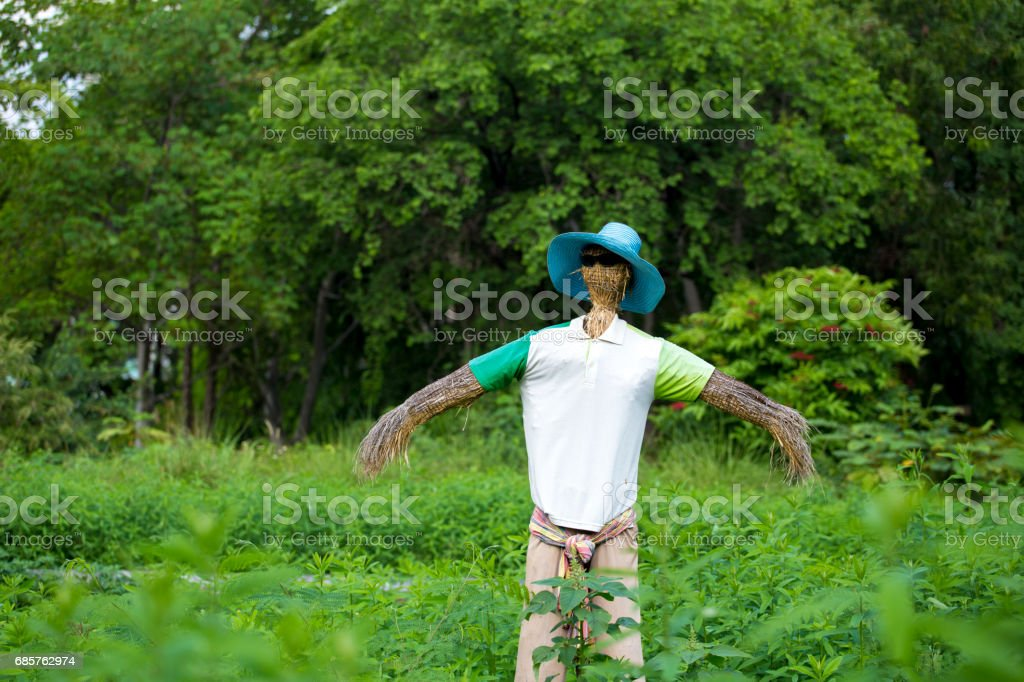 A scarecrow  ware sun glass and T shirt hat and trouser. stock photo
