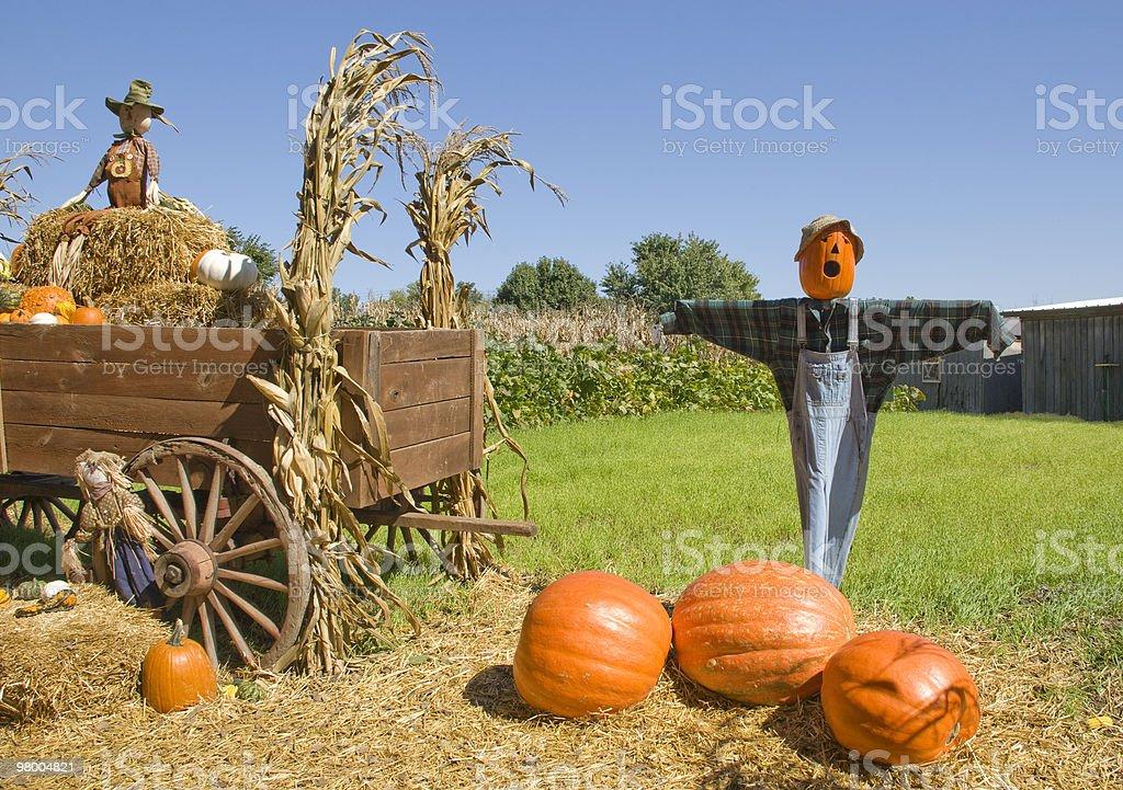 Scarecrows On Pumpkin Farm royalty-free stock photo
