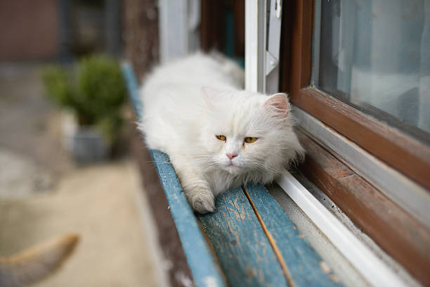 Scared cat Scared cat on the window sill daunt stock pictures, royalty-free photos & images