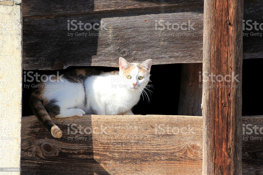 scared cat stock photo