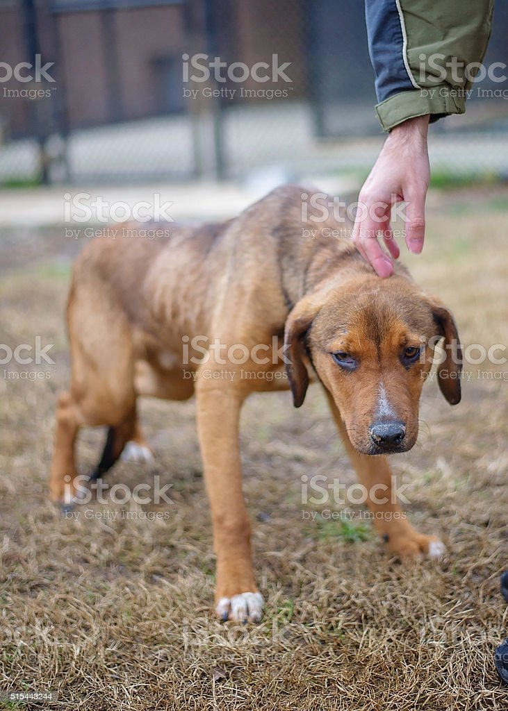 Scared Dog in Shelter stock photo