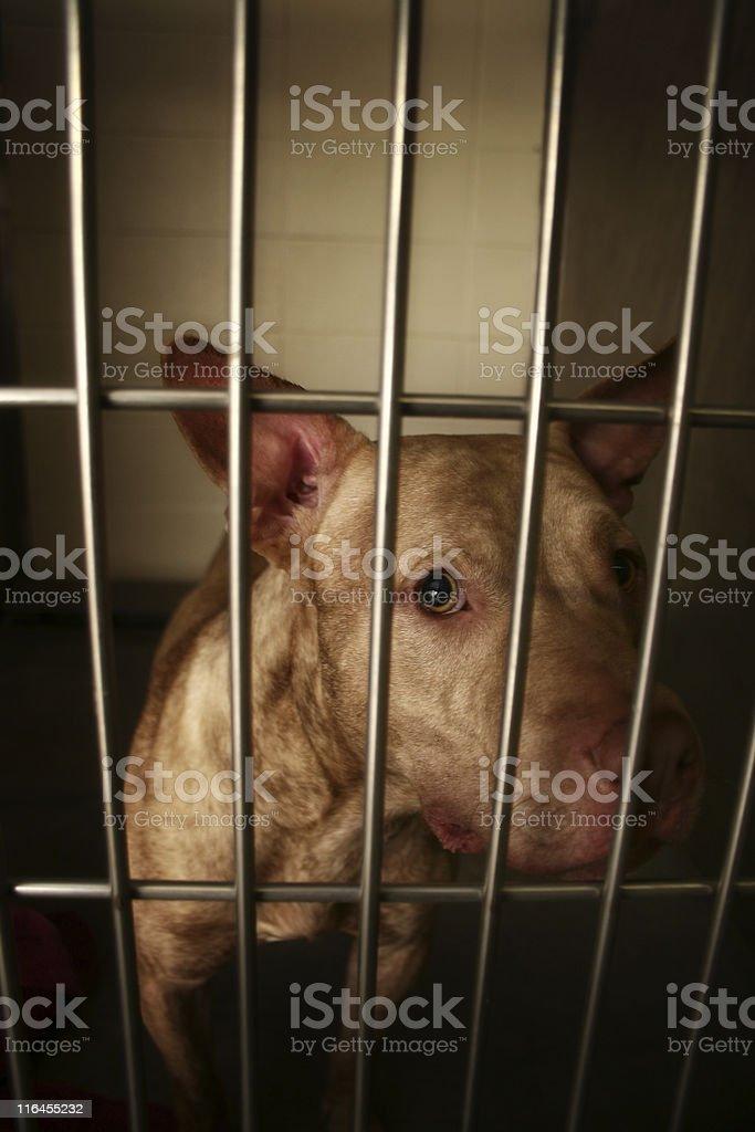 Scared Dog royalty-free stock photo
